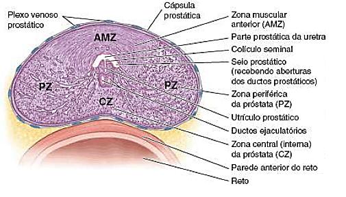 Despre Cancerul de Prostată