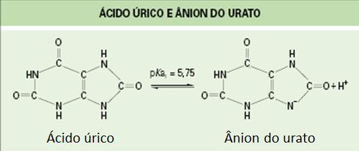 Variantes do urato no organismo.